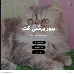 فروش گربه پرشین ماده چشم سبز سوپر فلت