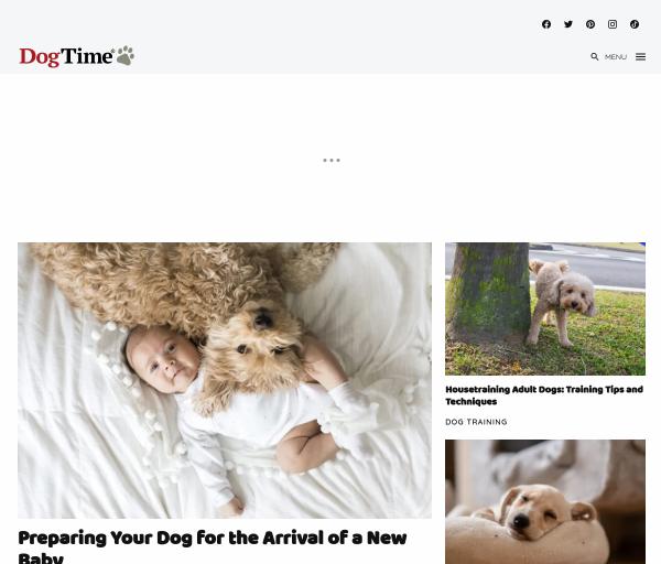 dogtime.com Informe SEO
