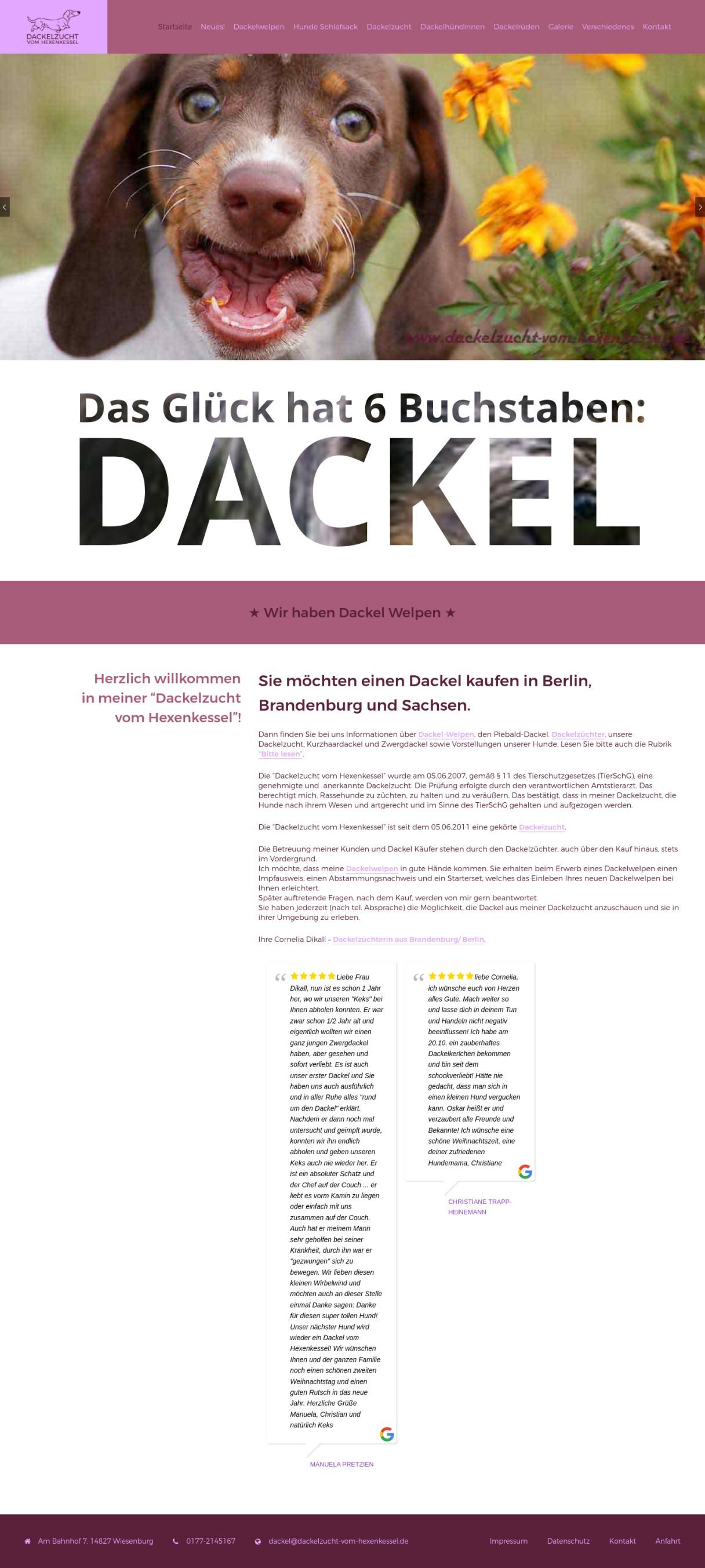 Dackelzucht vom Hexenkessel, Dackelwelpen für Berlin-Brandenburg
