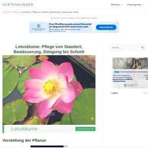 Lotusblume: Pflege von Standort, Bewässerung, Düngung bis Schnitt